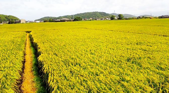 ジブリ旅 福岡