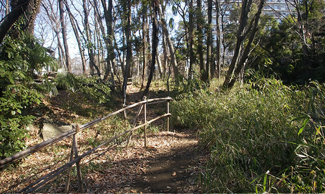 淵の森 下草刈り