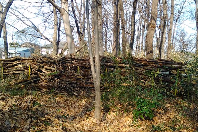 淵の森の会 早春の下草刈り