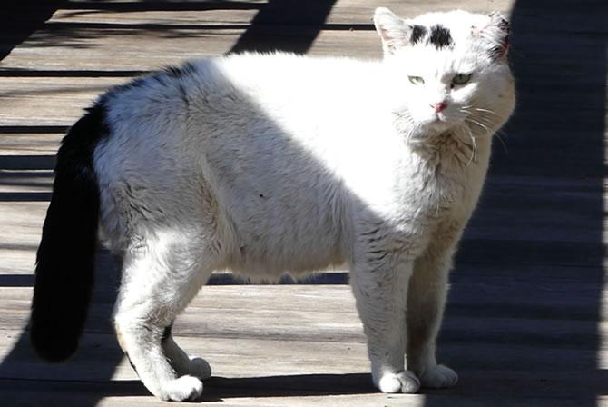 ジブリ美術館 猫