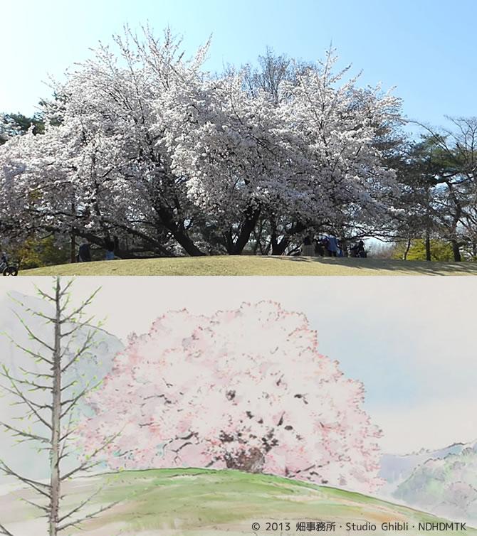 野川公園 かぐや姫の物語